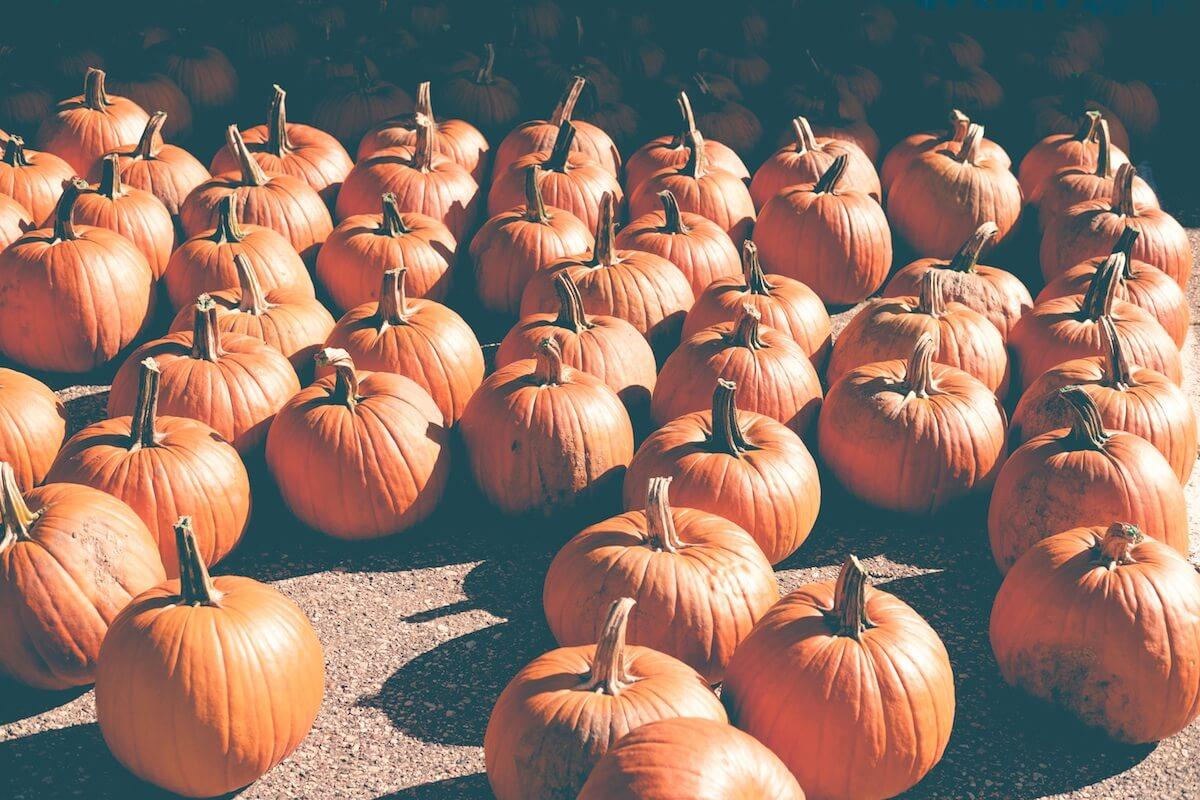Per raccontare la storia di Halloween – la festività pagana più amata dai bambini  del Nord America – ha senso partire dall etimologia della parola non ... 23fa8869a254